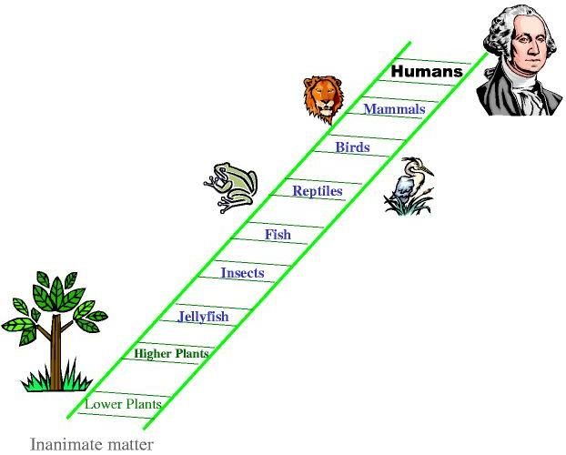 Ladder of Evolution (Image from Evolve or Die)